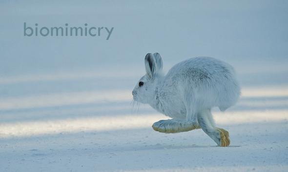 hare copy