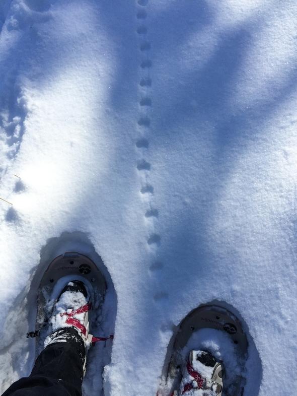snowshoes_kms004
