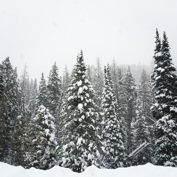 wintersolstice_kms018