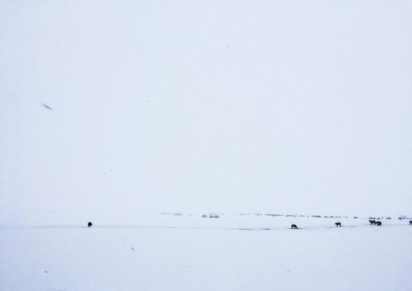 wintersolstice_kms028